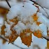 Late Fall Snow