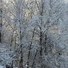 Morning Snowfall