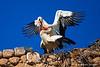 Storks in love 2