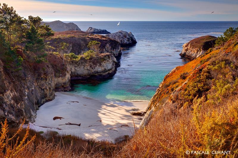 China Cove 2- Point Lobos