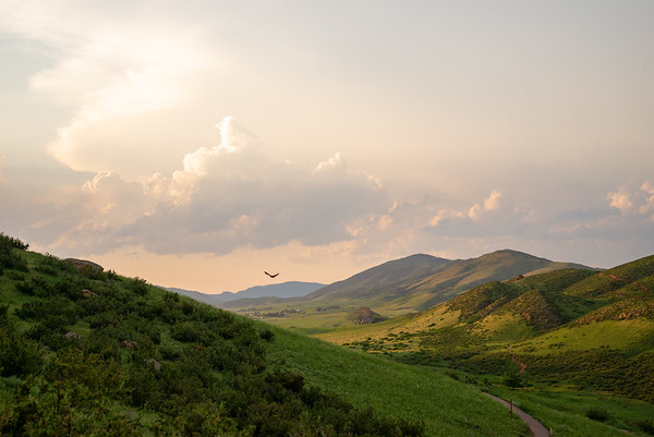 A bird scans the lush prairie grasses beneath a colorful sunset at Devils Backbone Open Space in Colorado.