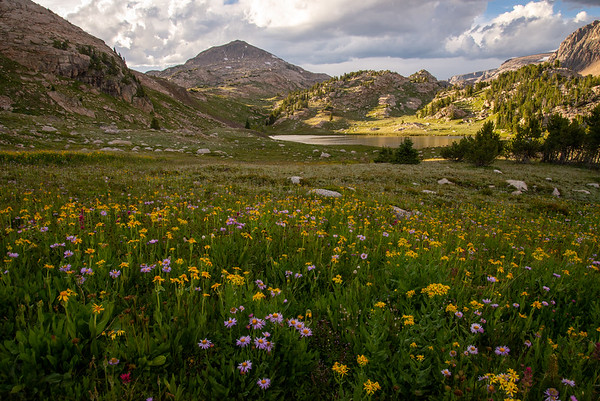 Wildflowers blanket an alpine meadow near an unnamed lake in the Beartooth Mountains on the border of Wyoming and Montana.