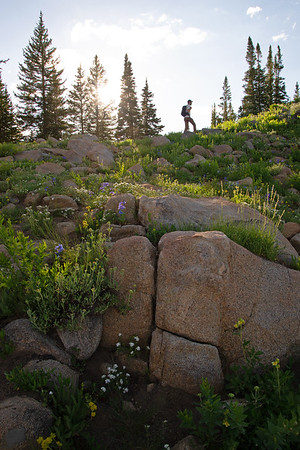 Boulders and wildflowers dot the alpine ridges of the Wasatch Range in Utah.