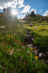 Hiking among the colorful alpine meadows of the Beartooth Mountains high country on the border of Wyoming and Montana.