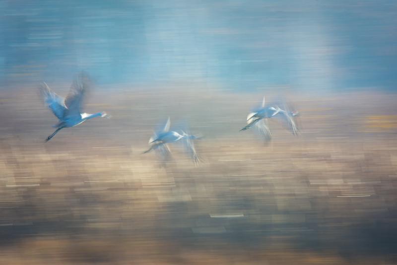 Abstract Flight