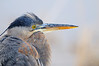 PORTRAIT OF A HERON