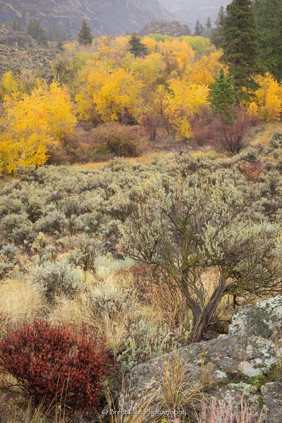 DF.5274 - Buckwheat, sagebrush, and aspen in fall, Northrup Canyon State Park, WA.