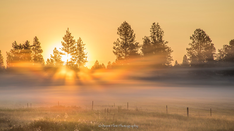 DF.5187 - sunrise through trees and foggy field, Columbia Plateau Trail State Park, WA.