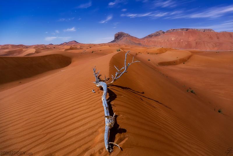 Moonlit Dunes