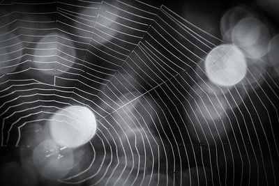Spiderweb Perfection