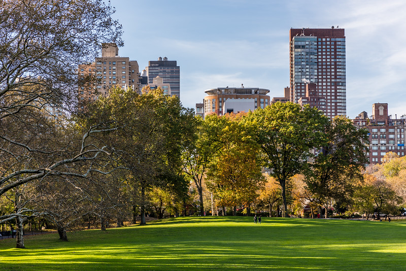 Central Park Green Autumn