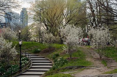 Serene Central Park
