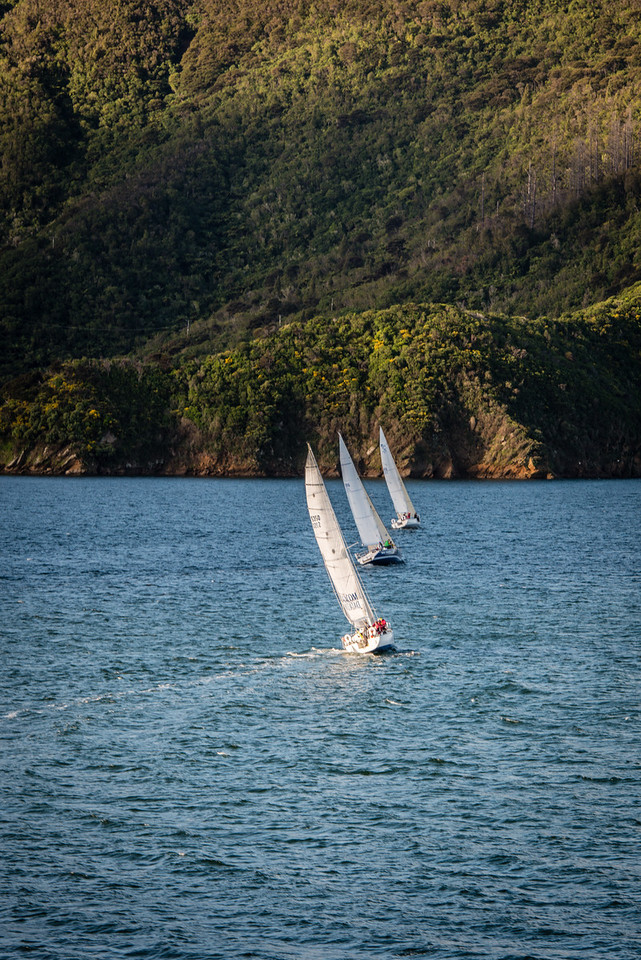 Picton Regata