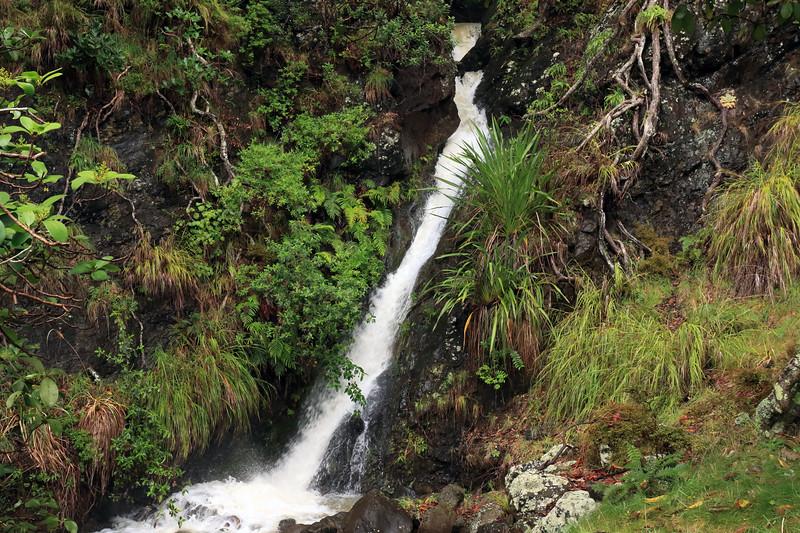Mountain stream flowing from the Mangaroa Range - Raukumara Peninsula - Gisborne (East Cape) region.