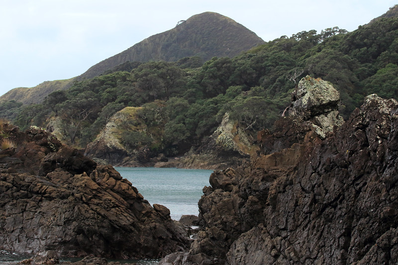 From the lithophytic lichen and tussock grass upon the volcanic basalt rock - beyond to the peak rising up to around 472 ft (144 m) above Lottin Point (Wakatiri) - the northernmost point of the Gisborne (East Cape) region.