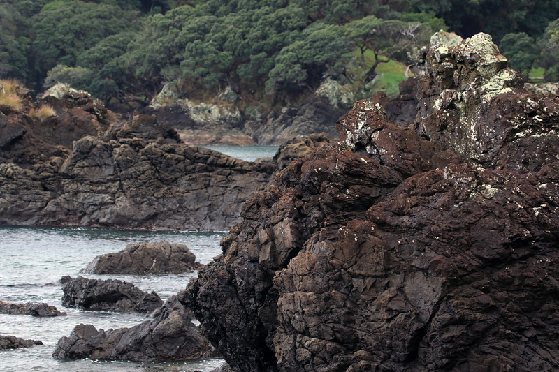 Lithophytic lichen thriving upon the volcanic rock - Mangaroa Range - Raukumara Peninsula - Gisborne (East Cape) region.