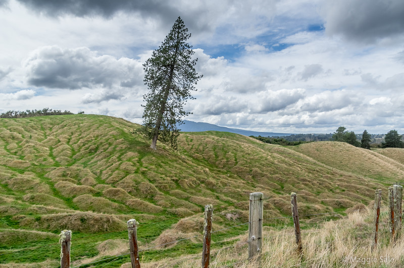 Interesting hills en route to the Volcanic Valley south of Rotorua