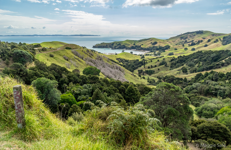 Looking west across the bay from the hills behind Coromandel town.