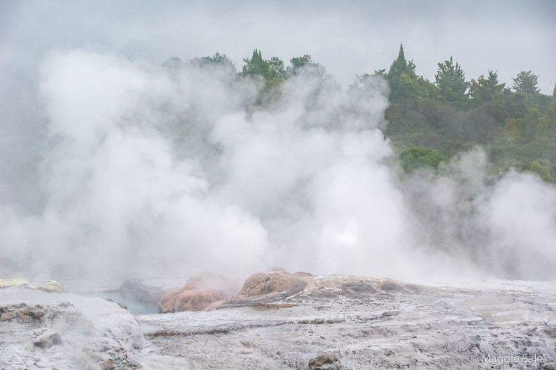 Looking towards the Pohuto Geyser area at Te Puia, Rotorua. A lot of steam but no geyser eruption while we were there.