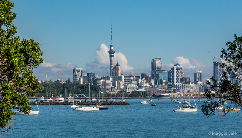 Auckland city centre from the marina