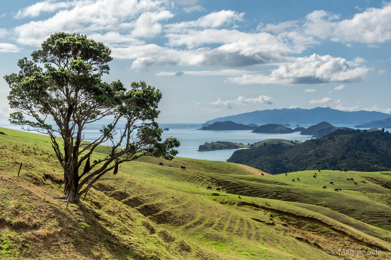 West coast view from one of the many hills and inlets south of Coromandel town