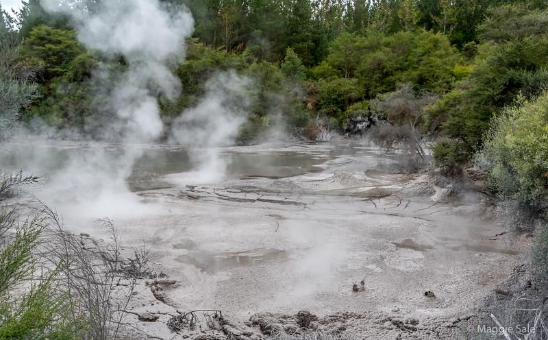 Mud pools at Wai O Topu