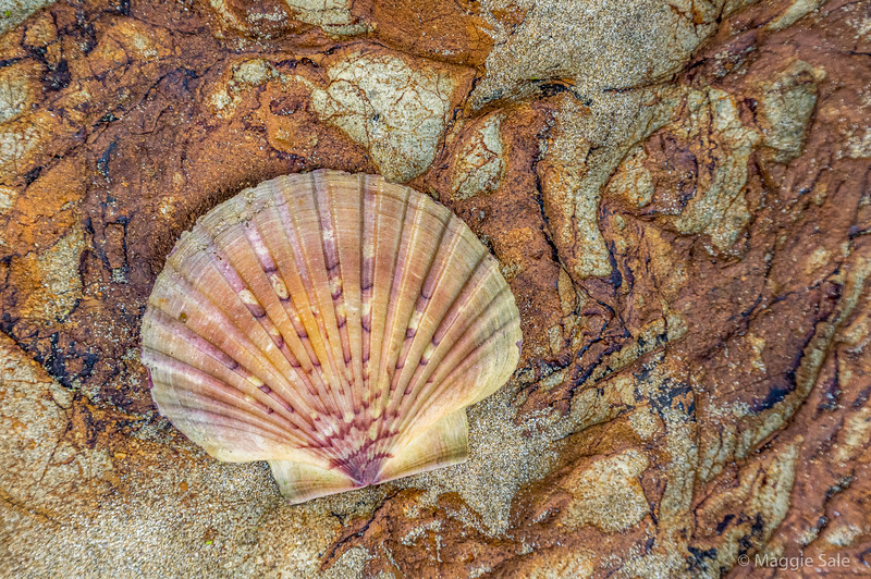 Interesting rocks and the perfect scallop shell found nearby on the island.