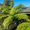 Our cabin accommodation with large tree fern in Abel Tasman NP.