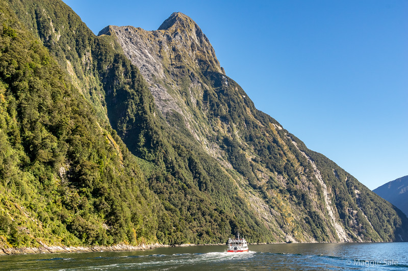 Heading down the Sound with Mitre Peak rising up over 5,500 ft straight up from the fiord.