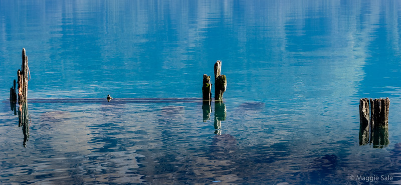 Old jetty posts near the shore along Lake Wakatipu