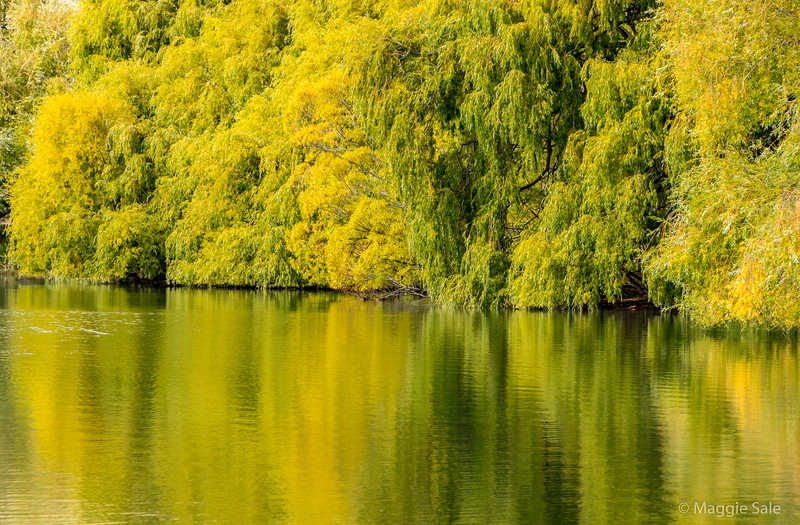 Down the Waitaki valley there were some lakes and stands of trees turning yellow