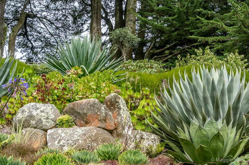 The beautiful gardens at Larnach Castle.