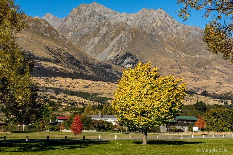 Park by the lake in Glenorchy