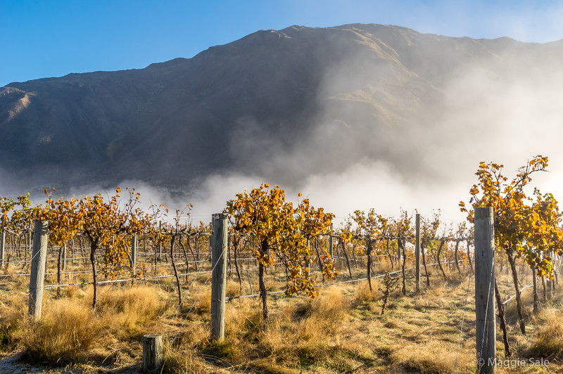 Leaving the Queenstown area we started our journey north west to the coast via Wanaka and Haast Pass, through the Mount Aspiring NP. A wine and fruit growing valley still had early morning mist as we started out.