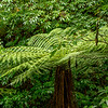A beautiful tree fern on a short walk to Purakaunui Falls through lush forest.