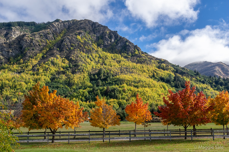 On the road to nearby Arrowtown. Some of the best autumn colour in NZ is found in this area. It wasn't quite at it's peak when we were there as it had been a hot summer and colours were later but our timing was pretty good - well researched!