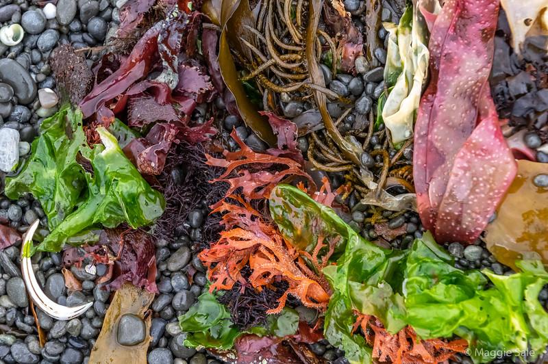 Seaweed still life!