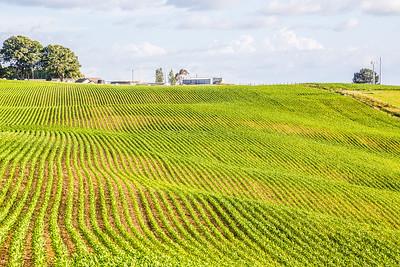 New Zealand has very pretty farms...