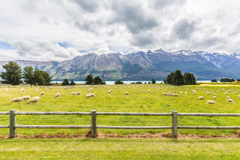 Some pretty farmland by the lake at Glenorchy.