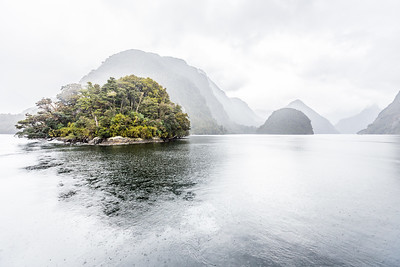 To help some of New Zealand's native animals survive, they've been clearing islands of predators and moving some of the endangered species onto these islands. Rolla Island in Doubtful Sound is one such island - I think they said it's still in the process of being cleared but I'm not 100% sure.