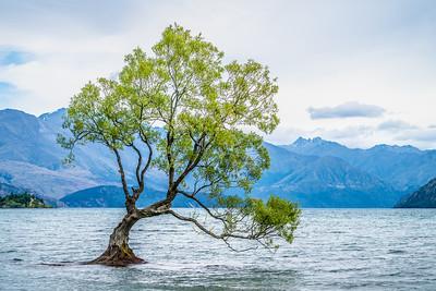 That Wanaka Tree | Wanaka, NZ