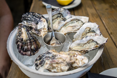 Oysters | Auckland, NZ