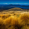 Downhill Through Golden Landscape