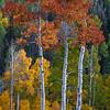 """""""Harmony of Autumn"""""""