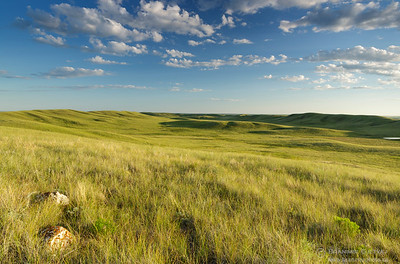 Native prairie at Fairview PFRA community pasture. Near Fiske, Saskatchewan