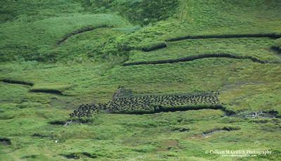 Cutting Peat  © 2005 Colleen M. Griffith.All Rights Reserved.  This material may not be published, broadcast, modified, or redistributed without written agreement with the creator.  This image is registered with the US Copyright Office.   www.colleenmgriffith.com www.facebook.com/colleen.griffith  Isle of Skye, Scotland