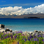 "New Zealand : This New Zealand gallery contains photos captured on both the south and north islands of New Zealand.    San Francisco Bay Area Photographer Colleen M. Griffith is a professional advertising, stock photo, fine art, lifestyle, and wedding photographer.  She has lived in California's San Francisco Bay Area for many years and also offers photo workshops and safaris that include the area's countless photogenic sights.  Satisfaction guaranteed. Colleen can be contacted directly at csmgriffith@yahoo.com or 303-506-3479 (cell phone).  Note, the copyright watermark (the text ""Copyright Colleen M. Griffith Photography, www.colleenmgriffith.com"") will NOT be printed on any purchased prints or downloads.  Friend Colleen on Facebook"