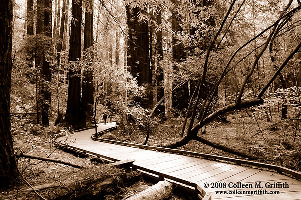 "Muir Woods<br /> © 2008 Colleen M. Griffith. All Rights Reserved.  This material may not be published, broadcast, modified, or redistributed in any way without written agreement with the creator.  This image is registered with the US Copyright Office.<br />  <a href=""http://www.colleenmgriffith.com"">http://www.colleenmgriffith.com</a><br />  <a href=""http://www.facebook.com/colleen.griffith"">http://www.facebook.com/colleen.griffith</a>"