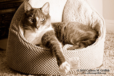 "Sepia Conversion of ""Tiny Tim Builds His GQ Modeling Portfolio"" ©  2010 Colleen M. Griffith. All Rights Reserved.  This material may not be published, broadcast, modified, or redistributed in any way without written agreement with the creator.  This image is registered with the US Copyright Office. www.colleenmgriffith.com www.facebook.com/colleen.griffith"