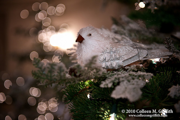 """Peace On Earth ©  2010 Colleen M. Griffith. All Rights Reserved.  This material may not be published, broadcast, modified, or redistributed in any way without written agreement with the creator.  This image is registered with the US Copyright Office. www.colleenmgriffith.com www.facebook.com/colleen.griffith   <a href=""""http://www.colleenmgriffith.com/Galleries/New/2010-New-Photos/13407757_C6nwm#1161952301_hTi8J"""">Click here to see a version of this photo with the green fiber on the bird's wings (near the tail) removed.</a>"""